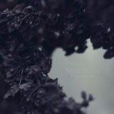 Nebelung – Palingenesis