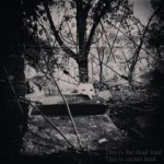 Capa – This Is the Dead Land This Is Cactus Land