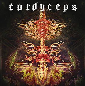 Cordyceps - Cordyceps