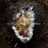 Non Opus Dei / Morowe – Dziwki dwie