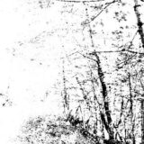 Agalloch – The White