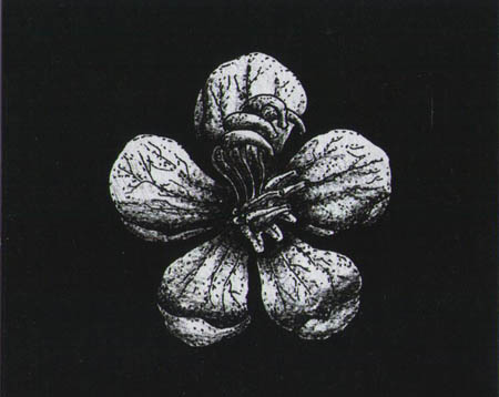 Hidden Persuaders - Flowers of the Abyss